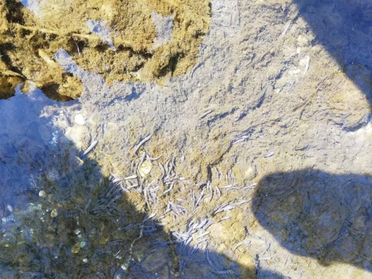 Fischbesatz durch die Gewässerwarte