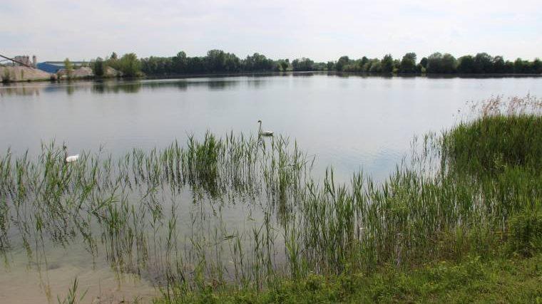Abschnitt 1 im Vereinsgewässer Mossandlsee.